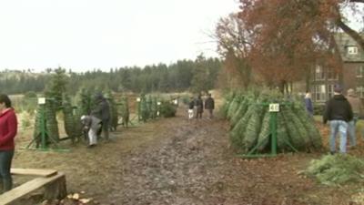 Hutton Settlement Christmas Tree Farm