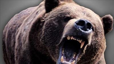 Man facing charges after surviving bear attack