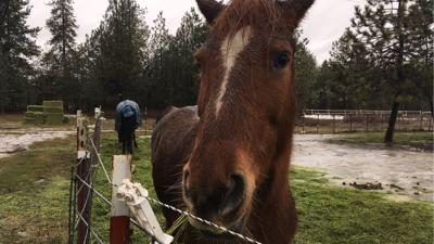 Second Chance Ranch needs help moving horses into new home