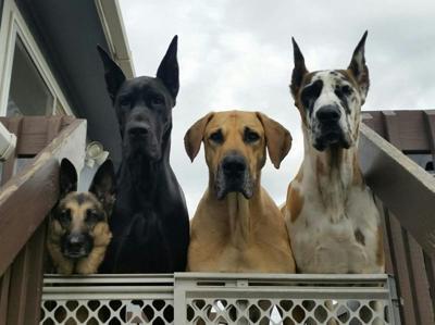 YOUR PET PHOTOS: National Pet Day!