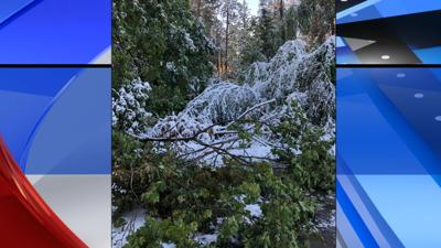 trees down in East Central -