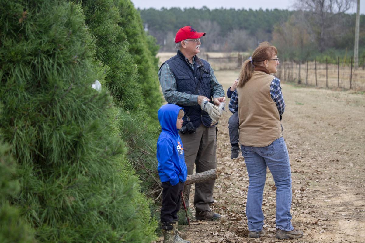 Danville Farms Christmas Trees 1.jpg