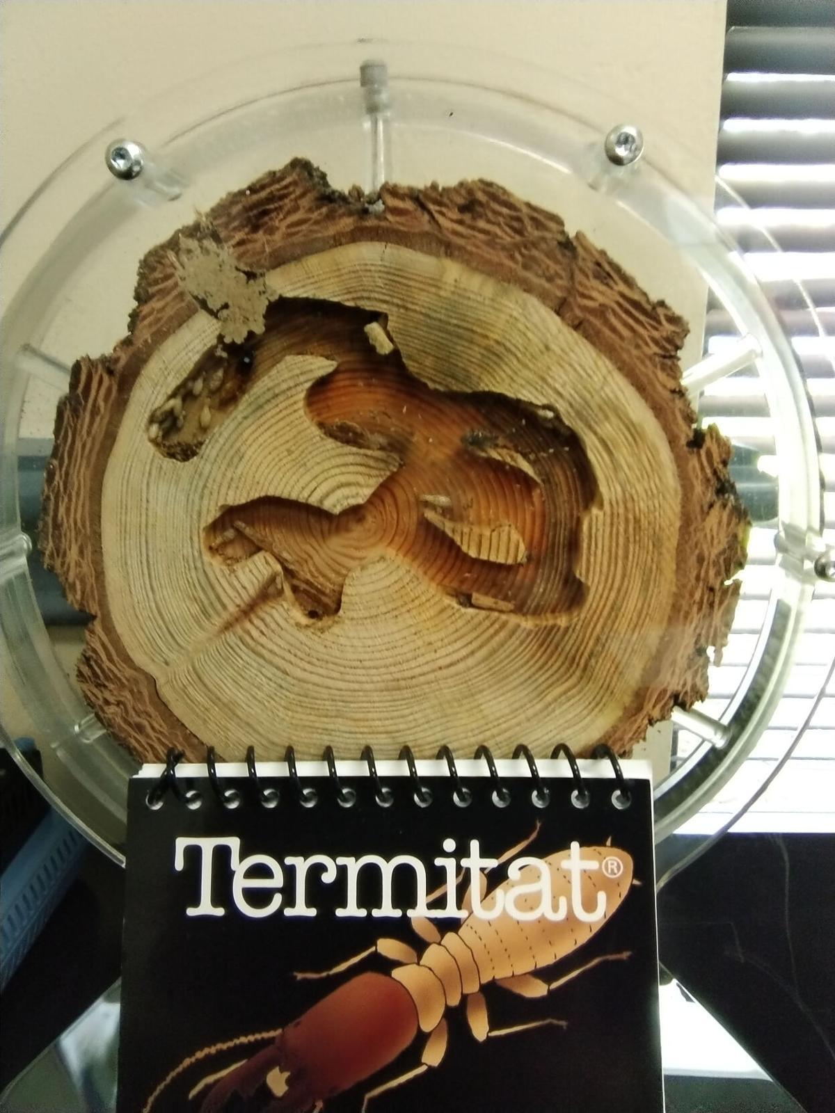 Termite Habitat.jpg