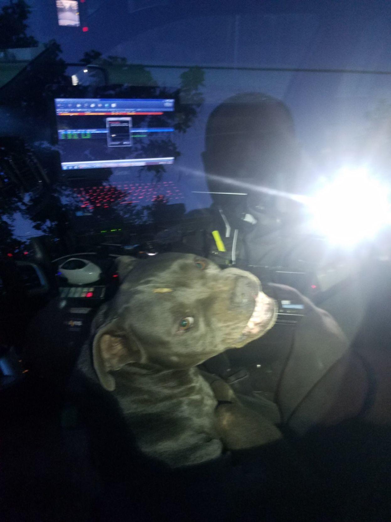 Pugnacious pit hijacks police patrol car