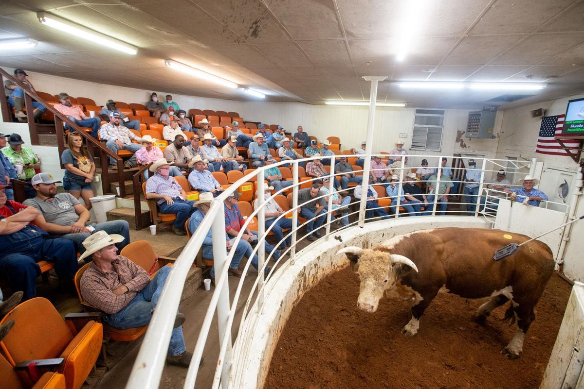 Hunt Livestock Exchange (copy)