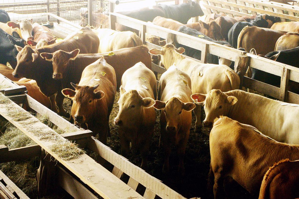 Ranchers face tough decisions