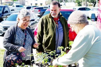 Kingsville Farmers Markets celebrates five years