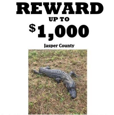 101221 Alligator Case (2).jpg