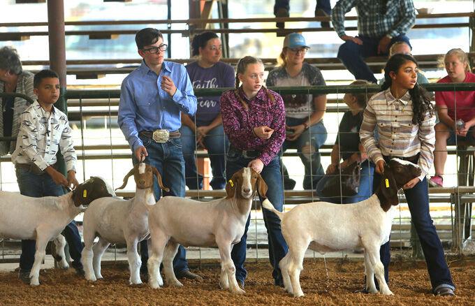 Livestock19