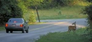 It's deer season on the state's roads and highways