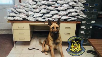 K9 Rony sniffs out nearly 300 pounds of pot in less than 2 weeks
