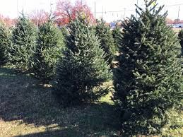 Optimist Club in Jefferson City sees biggest tree-selling day ever