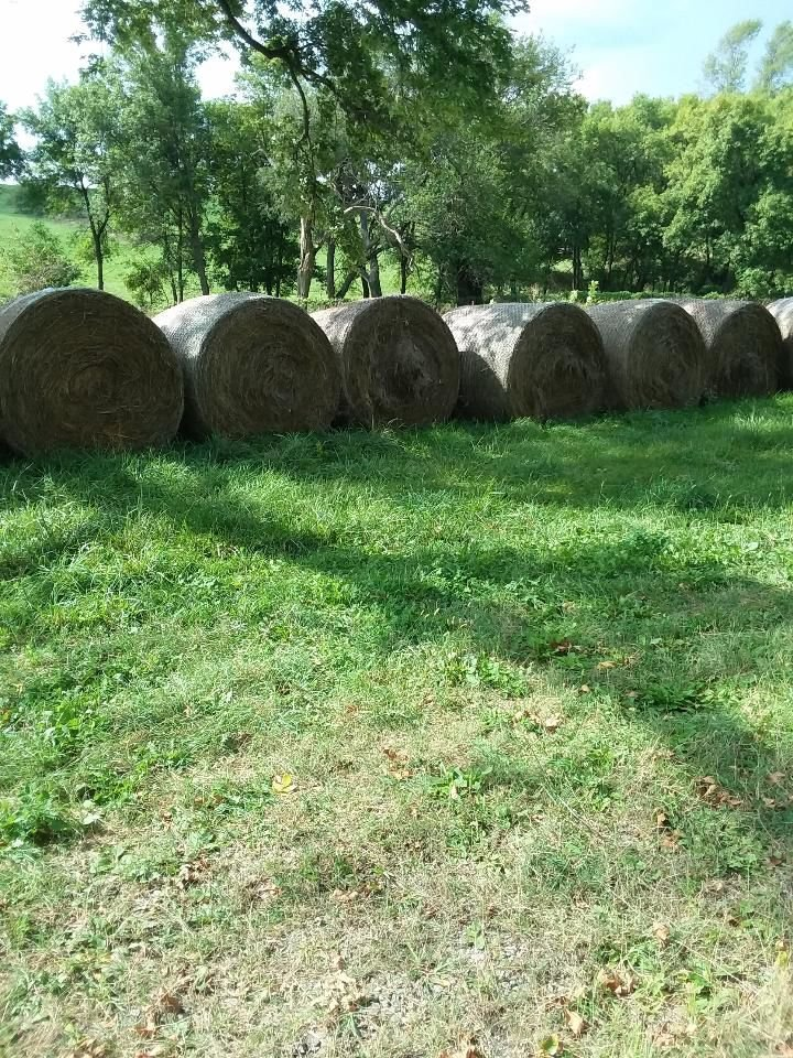 Large Bales of Bromegrass and Clover Hay image 1