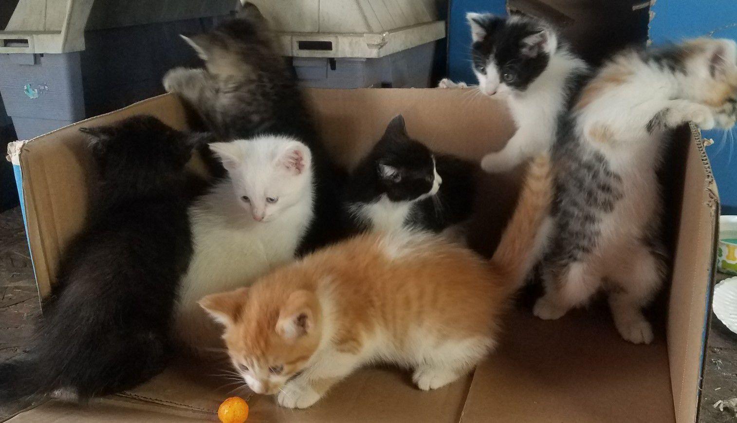 Free Kittens image 1