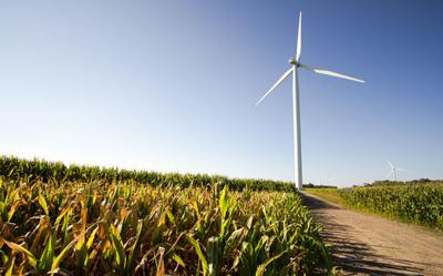 Michigan Wind Farm. Wind turbine in the middle of a corn field in the farm land of the American Midwest.