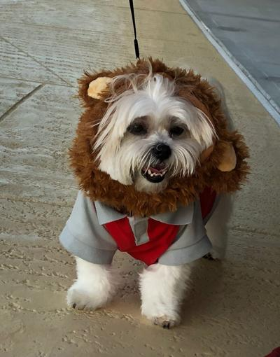 Pet in costume