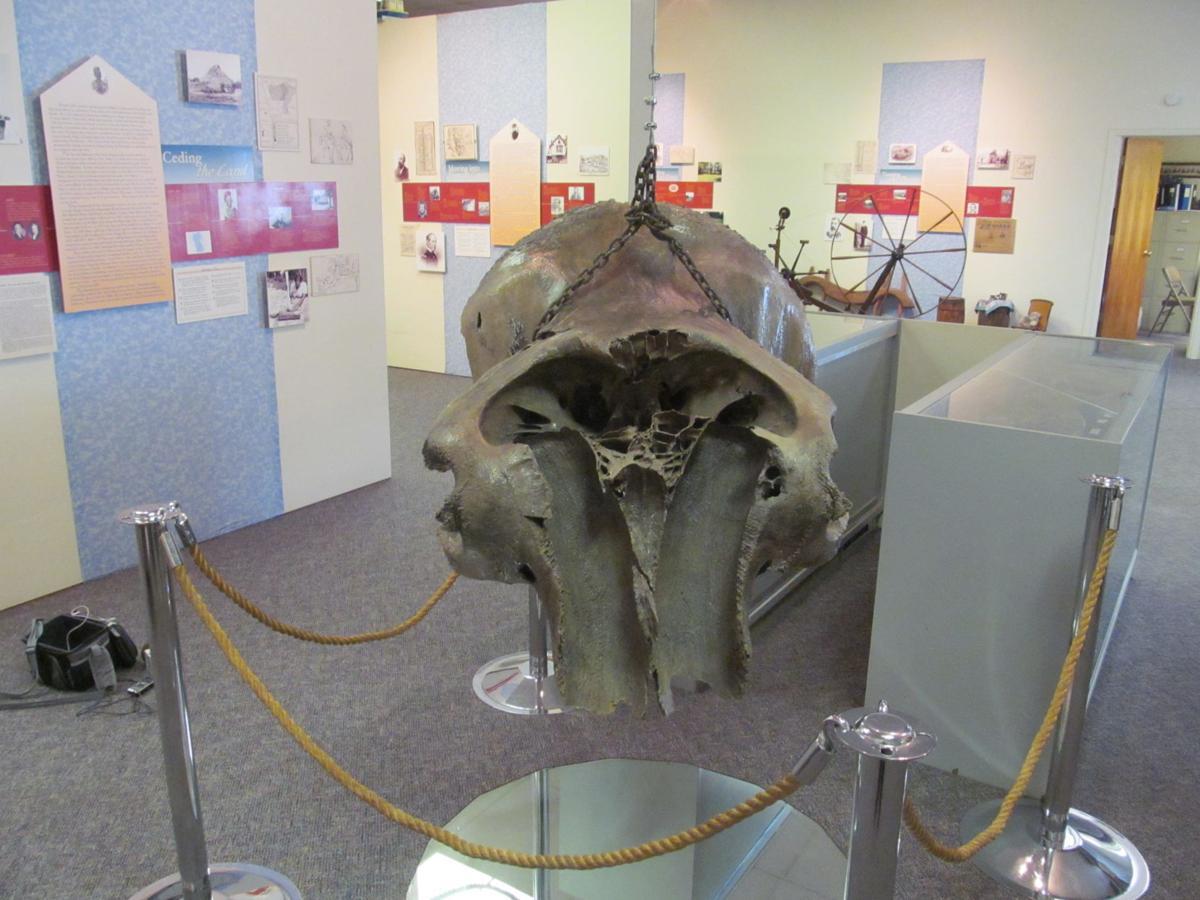 Mammoth's skull at Greater Shenandoah Historical Museum