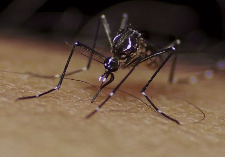 West Nile Found In Mosquitoes In Pittsfield