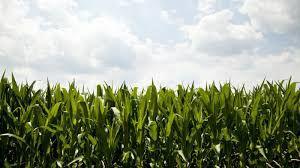 Iowa Department of Agriculture