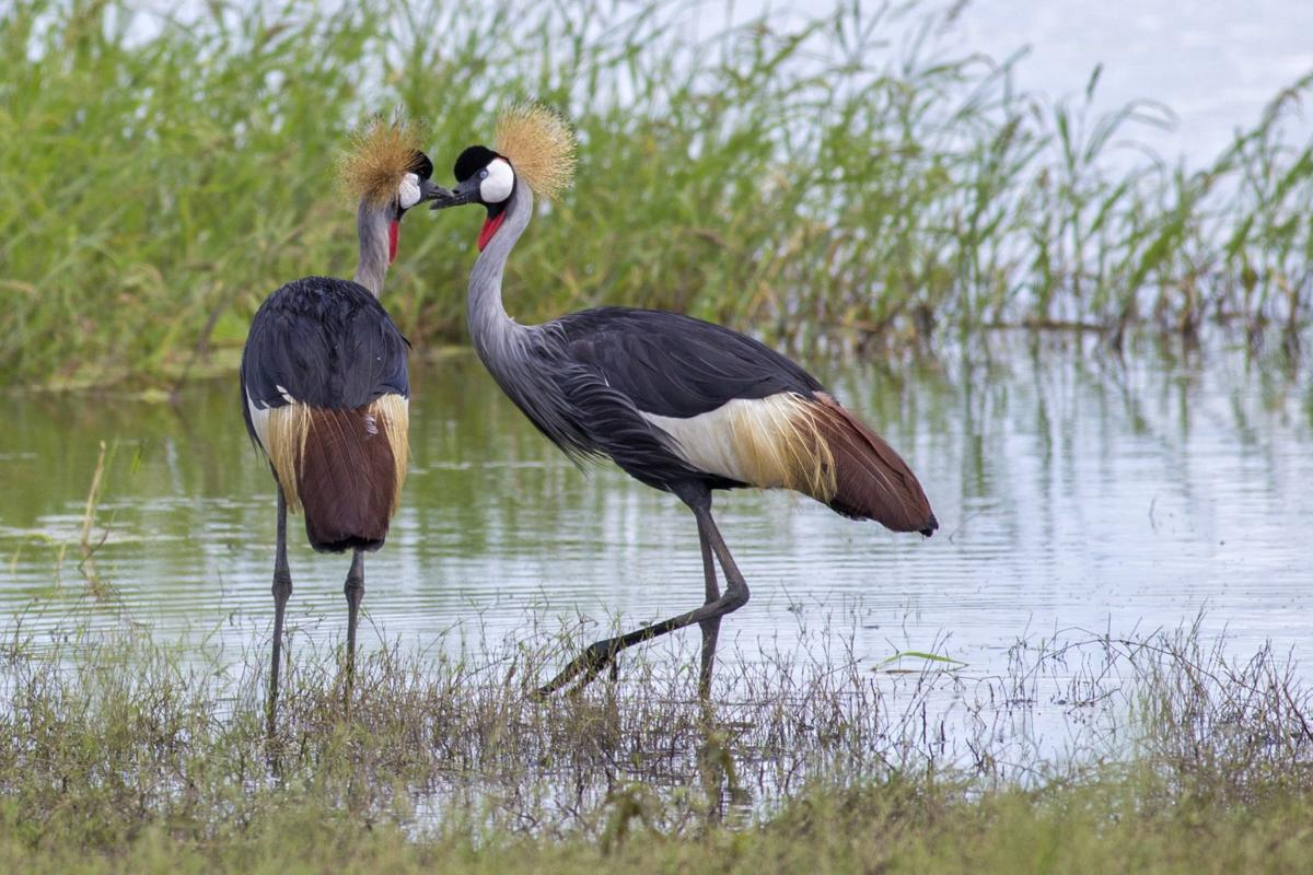 Birds in East Africa