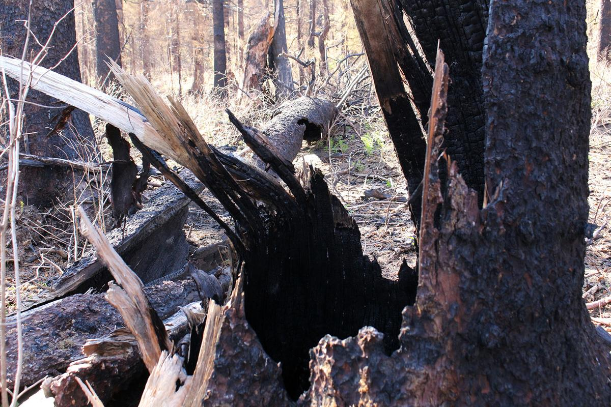 Burned timber