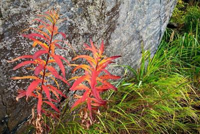 The fall equinox is ripe with color