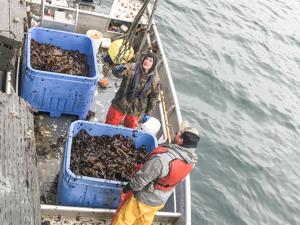 Kodiak Kelp Co. harvesters
