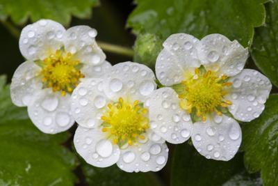 Marion Owen watering tips