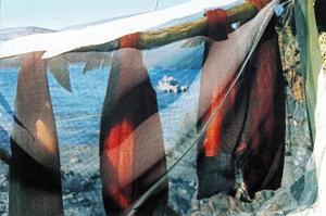 Fish drying