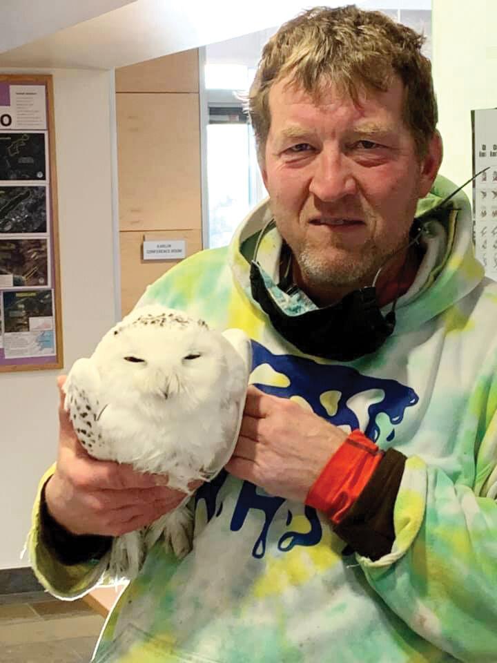 Snowy owl  rescued