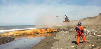Coast Guard finds dead gray whales on Tugidak