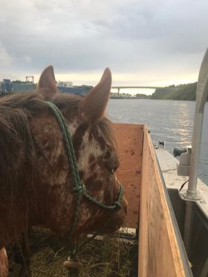 Horse on boat