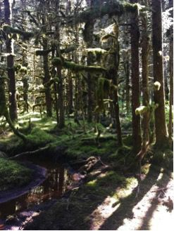 Unsung heroes of the Sitka spruce forest