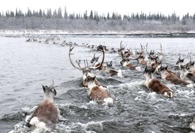 Long-distance champions of Alaska