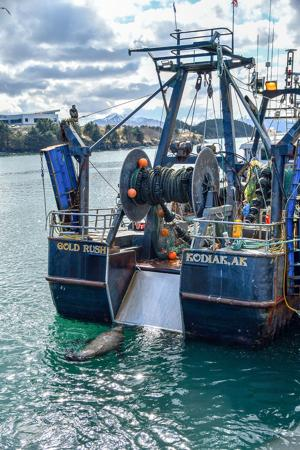 """<p class=""""p1"""">A fishing boat unloads at the Trident processing plant in Kodiak.</p>"""