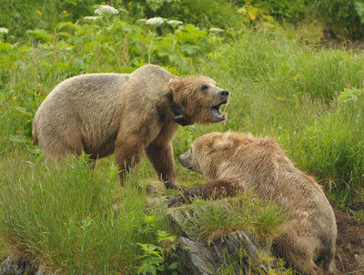 Kodiak National Wildlife Refuge biologists stay busy with summer projects