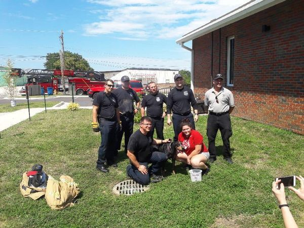 Firefighters rescue dog trapped in drainage pipe