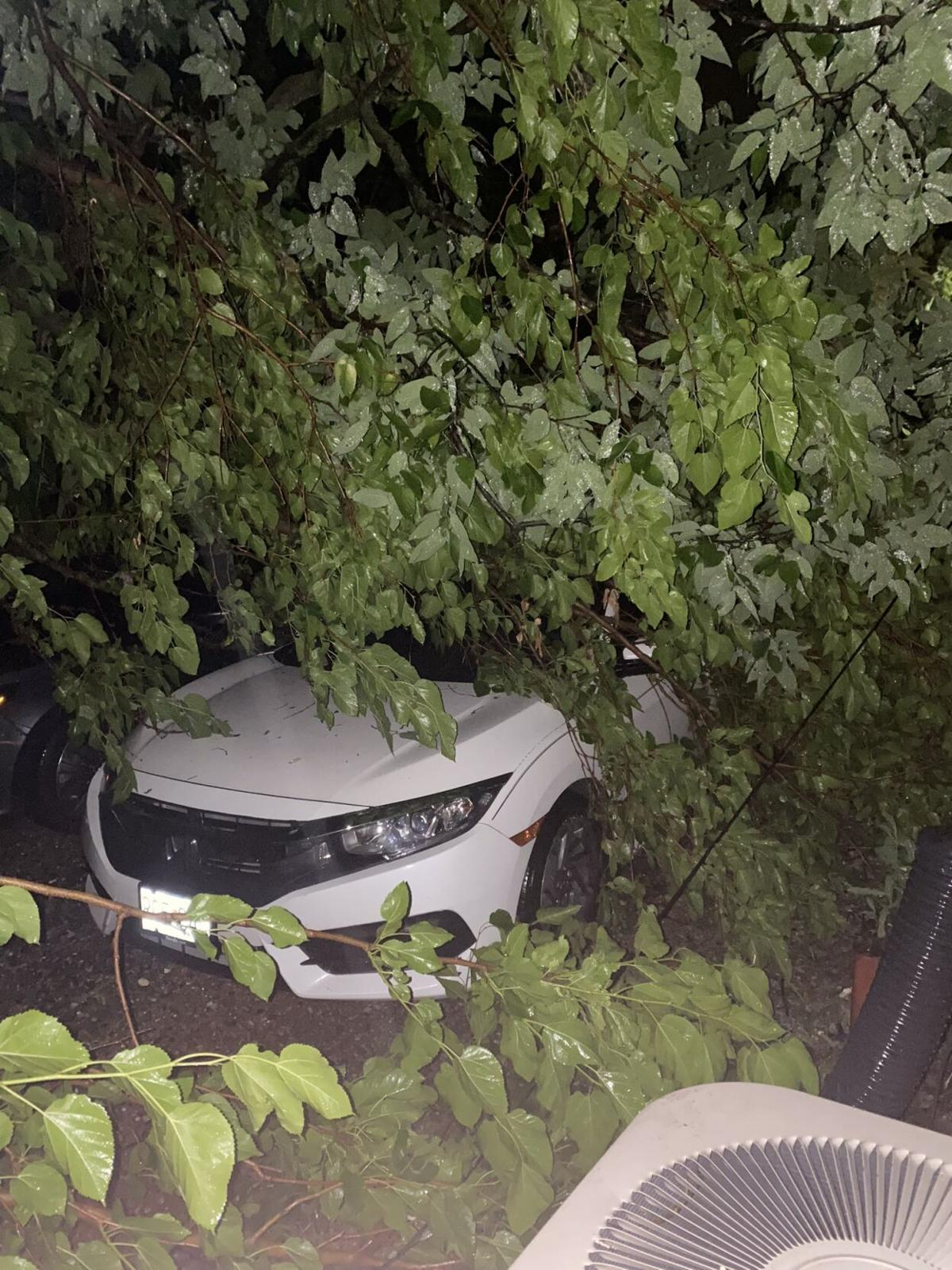 Vehicle affected from fallen tree, 2 of 2