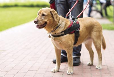 Therapy, service dogs