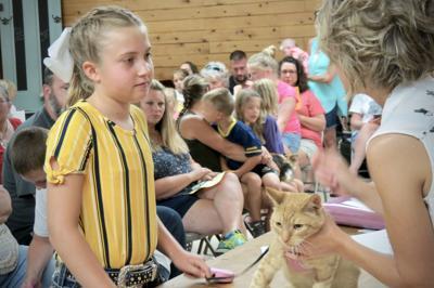 Cat show 2