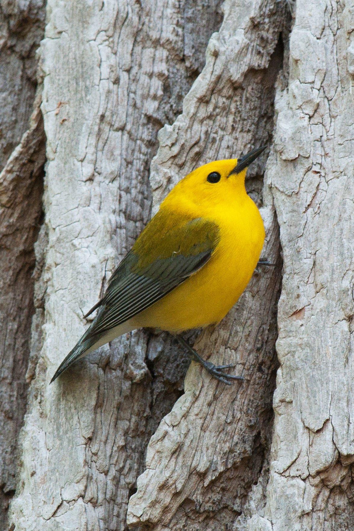 bird blitz brings birders closer to northeastern indiana species