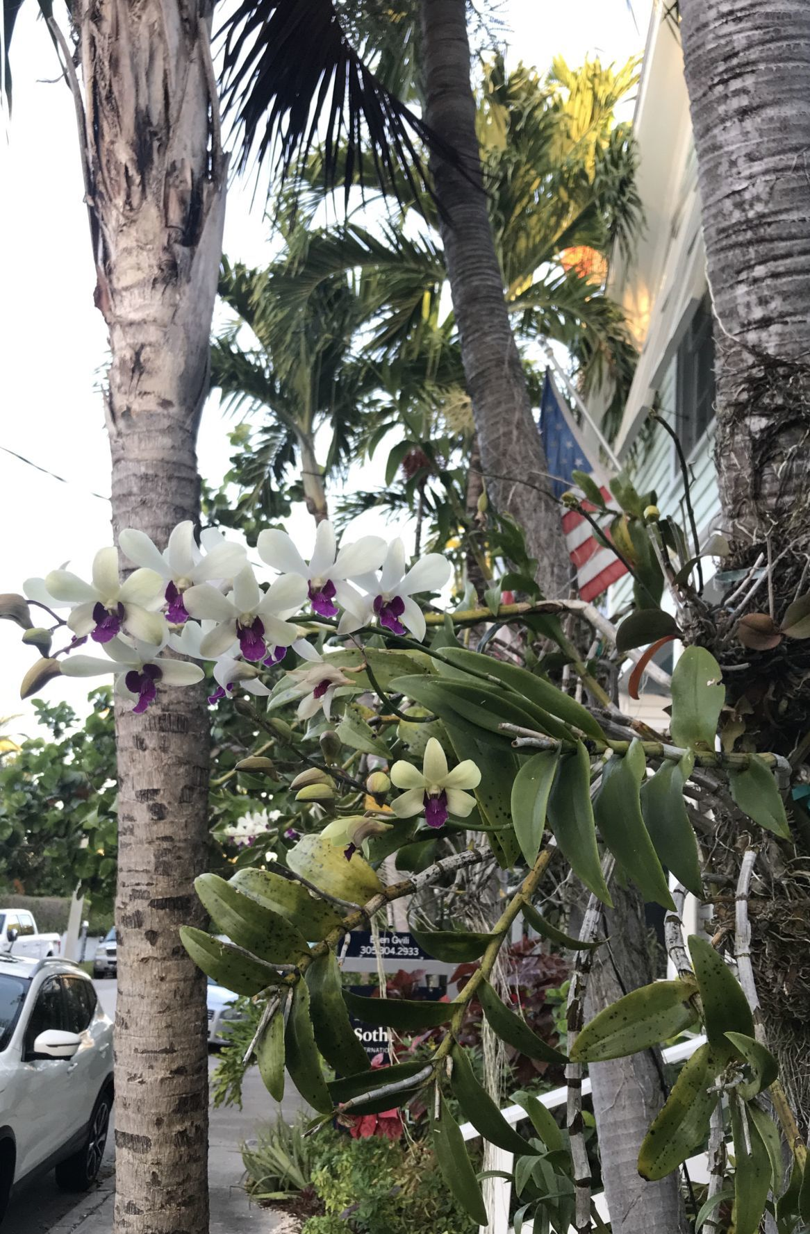 Orchids tree