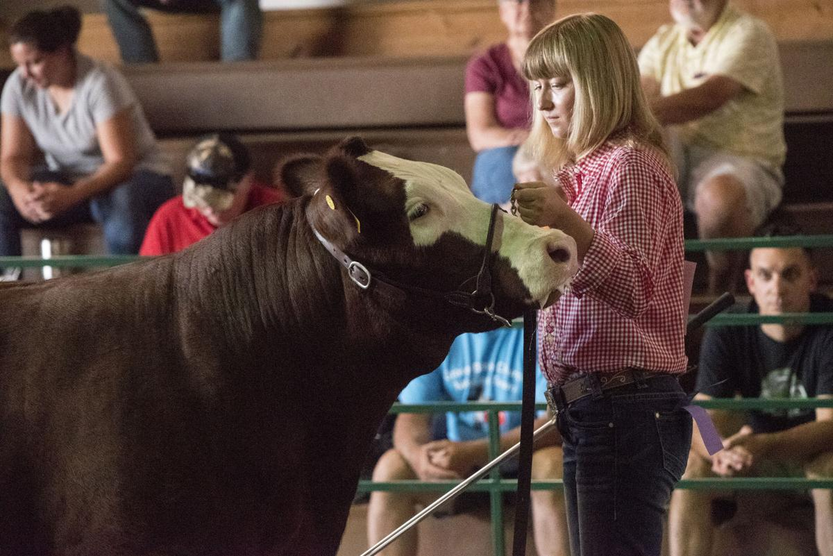 Working the show ring