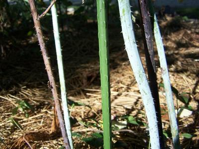 Dry August requires special pruning, fertilizing