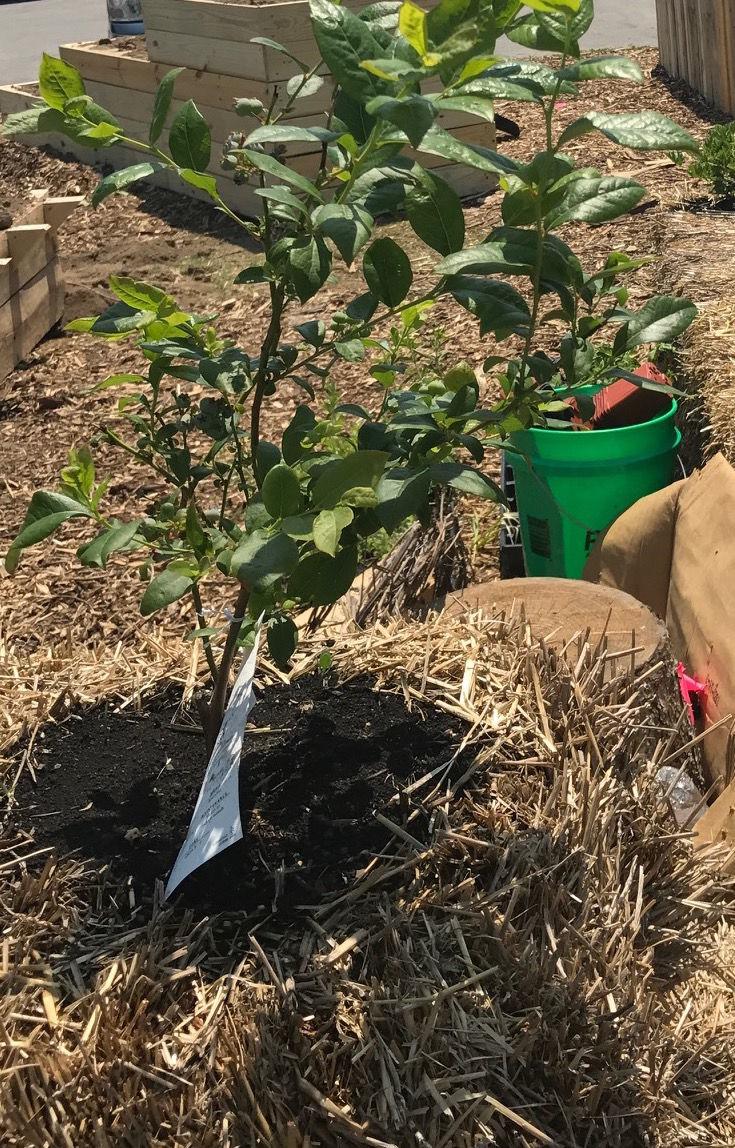 Urban garden raised community\'s interest | Garrett Clipper | kpcnews.com