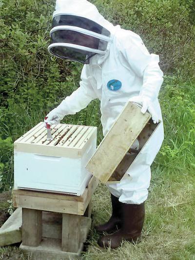 Beekeeping community bolsters new hive