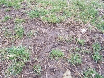 Seed Bare Spots In Your Lawn Early This Spring Columnists