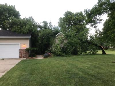 Trees down in Orchard Place