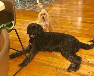 Doucette dogs