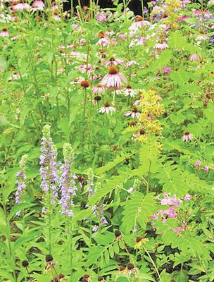 Nursery has native plants for habitat friendly landscaping
